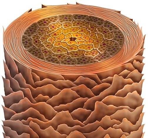 кератиновая структура волоса