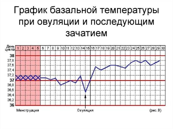 Признаки овуляции, базальная температура